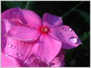 梅小路の花壇