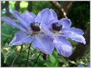 春の和の花かざぐるま