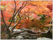 いのちの森の紅葉