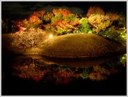 梅小路公園の朱雀の庭の鏡池に映る紅葉
