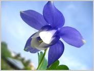 梅小路公園朱雀の庭の<春の和の花展>