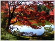 仙洞御所の紅葉