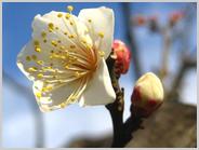 初咲きの冬至