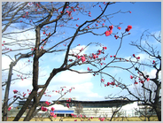 京都水族館と梅林